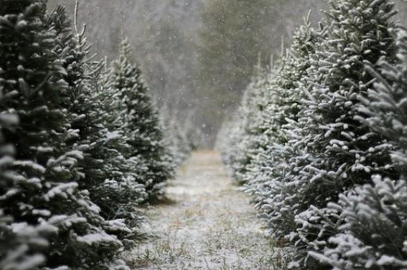 Christmas Pinterest.Christmas Trees The Paper Mulberry Pinterest