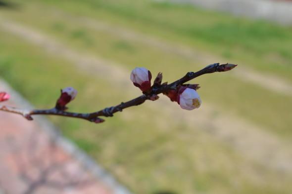 classiq-early spring