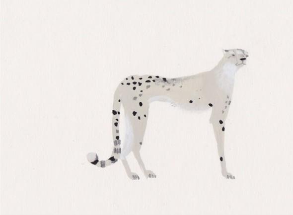 katrin coetzer-cheetah