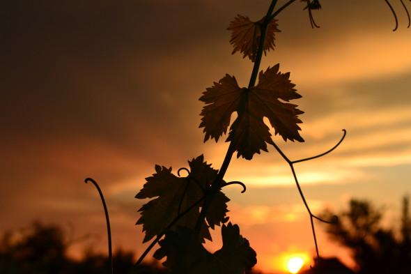 classiq-at sunset-1