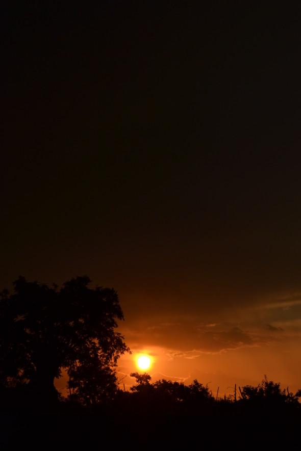 classiq-at sunset