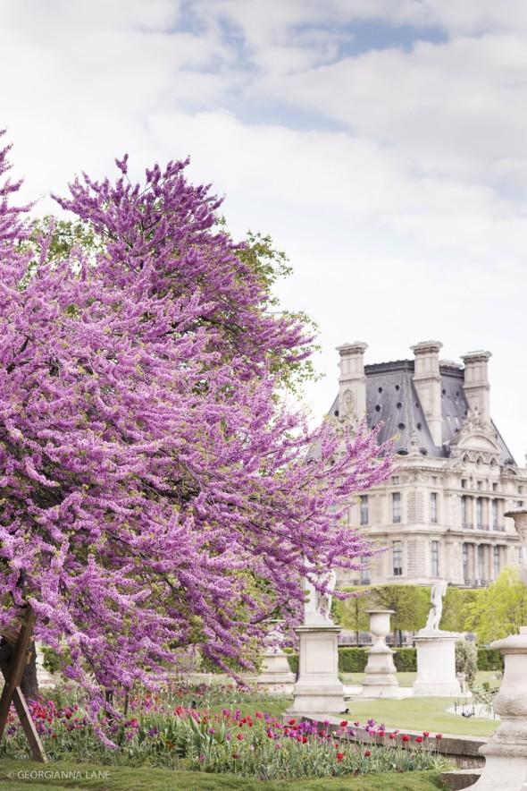 Paris by Georgianna Lane