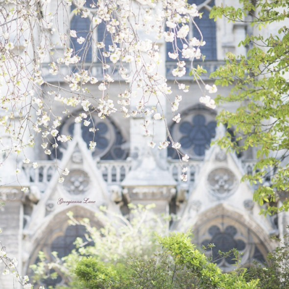 Paris in spring by Georgianna Lane